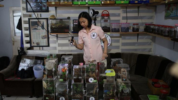Ming Chu, Perempuan Pencinta Tarantula