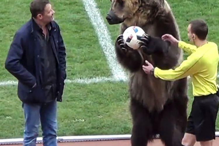 Tima, Beruang yang terlibat saat pembukaan pertandingan liga sepakbola di Rusia