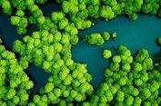 Kabar Baik, Indonesia Cegah Hilangnya Hutan Primer Pada 2017
