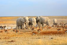 Dilanda Kekeringan, Namibia Bakal Jual 1.000 Satwa Liar