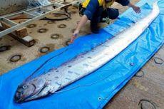 Ikan Laut Dalam Tertangkap Nelayan, Warga Jepang Khawatirkan Tsunami