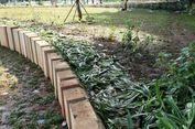 Pasca Piala Presiden, 80 Persen Taman di Kawasan GBK Rusak