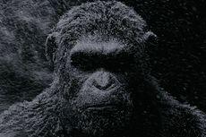Ilmuwan Spanyol Klaim Ciptakan Hibrida Manusia-Monyet di China