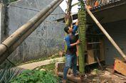 'Pisang Seribu' di Sawangan Kerap Ditawar dengan Harga Ratusan Ribu