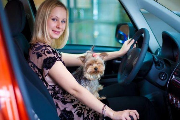 Ada tata cara khusus membawa hewan peliharaan saat berkendara.