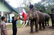Unik, Gajah Kibarkan Bendera Merah Putih Peringati HUT RI Ke-73