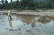 Lahan Persawahan Tertimbun Lumpur Sisa Banjir di Pacitan