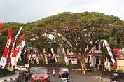 Kota Malang Akan Tetapkan 3 Jenis Pohon sebagai Warisan Budaya