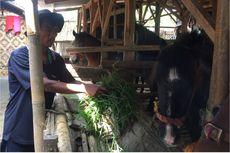 Cerita Pemilik tentang Kuda Abi yang Viral karena Terkapar di Stadion Pakansari