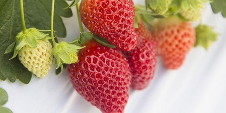 Wada Strawberry Farm