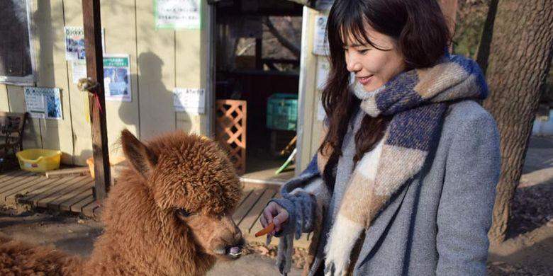 Di Dacho Oukoku (kerajaan burung unta), Jepang, ini juga ada area bernama Minami no Makiba di mana wisatawan dapat bermain dengan lebih dari 50 jenis hewan seperti kanguru dan kuda poni, alpaca (hewan sejenis unta yang berasal dari Amerika Selatan).