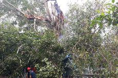 Pohon Beringin Berusia Puluhan Tahun Tumbang Timpa Rumah Warga, 50 Orang Mengungsi