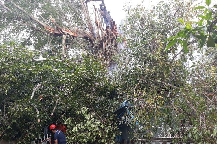 Pohon beringin atau kayu are raksasa yang telah berusia puluhan tahun terbakar, Minggu (21/7/2019).  Setelah terbakarn pohon tersebut tumbang dan menimpa 10 rumah yang ada di kawasan Tanjungunggat, Tanjungpinang.