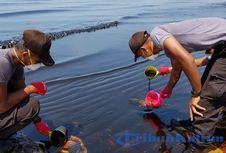 Kabar Baik, Ahli Temukan Cara Efektif Hapus Tumpahan Minyak di Laut