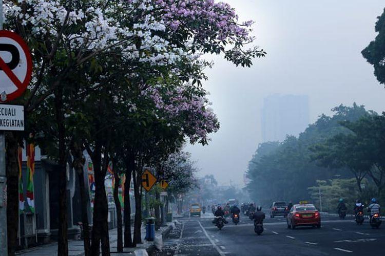 Pohon Tabebuya bermekaran di sejumlah jalan utama protokol Kota Surabaya