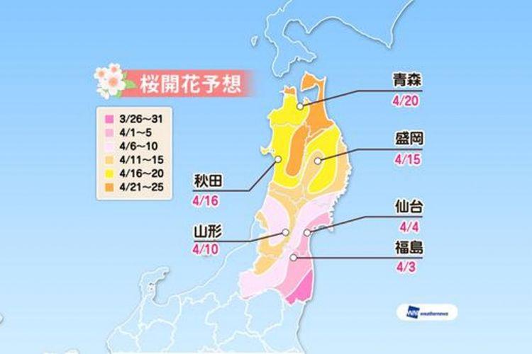 Prediksi sakura mekar di area Tohoku (Prediksi diumumkan tanggal 16 Januari 2019/ Weather News).
