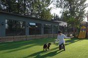 Rumah Senilai Lebih dari Rp 7 Miliar di China Ini Milik Seekor Anjing