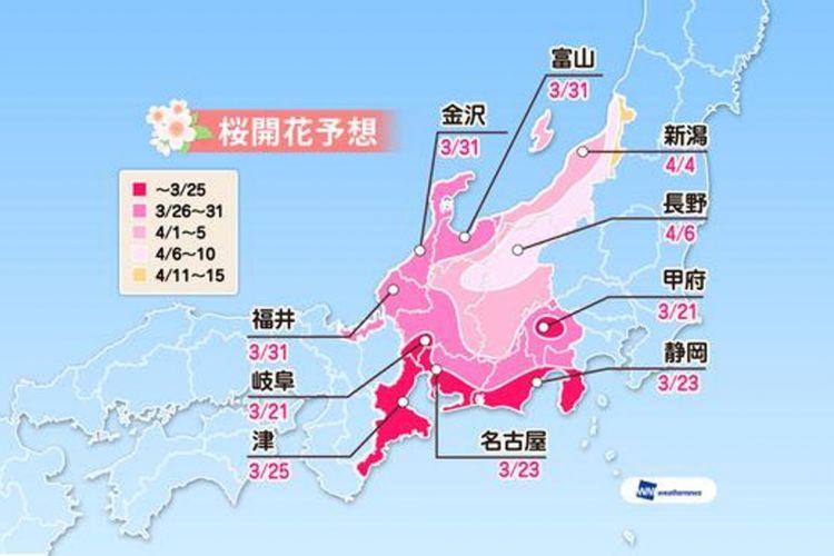 Prediksi sakura mekar di area Chubu (Prediksi diumumkan tanggal 16 Januari 2019/ Weather News).
