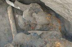 Mammoth Emas, Fosil Berbulu yang Diyakini Ahli Spesies Baru
