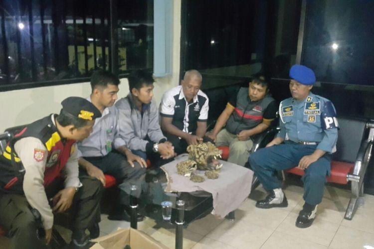 Kepala harimau sumatera dan kepala macan tutul diamankan di kantor Balai Gakkum seksi wilayah I Palangkaraya.