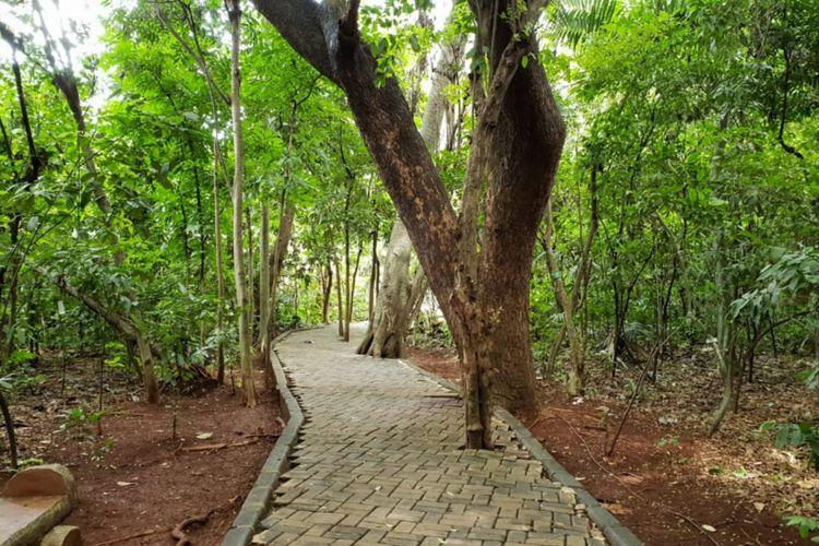 Rindangnya pepohonan di Hutan Kota Cijantung, Kamis (17/1/2019)