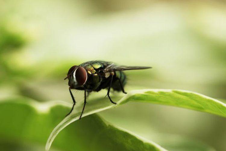 Jangan Usir Mereka, 3 Jenis Serangga Ini Berharga bagi Rumah Anda