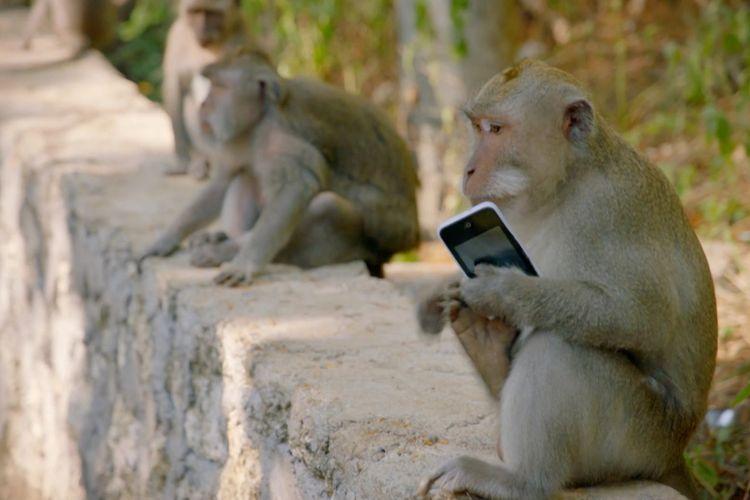 Monyet Uluwatu yang mencuri ponsel wisatawan