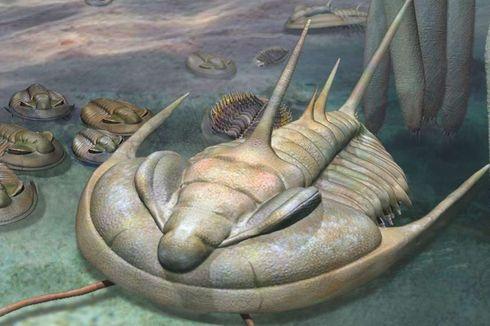 Ahli Australia Temukan Fosil