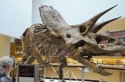 Ahli Duga Tanduk Dinosaurus Digunakan untuk Mencari Pasangan