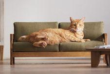 Lucu, Kucing Pun Kini Punya Furnitur Sendiri