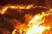 Kebakaran Hutan di Sydney Diduga akibat Kesengajaan