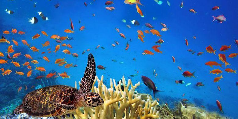 Virgin Island di Thailand. Pulau ini cocok untuk kamu yang ingin jauh dari keramaian, lebih dekat dengan alam, menikmati indahnya laut dan belajar lebih mengenai ekologi.