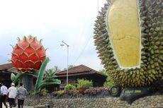 Di 4 Lokasi Ini Anda Bisa Langsung Makan Durian dari Pohonnya!