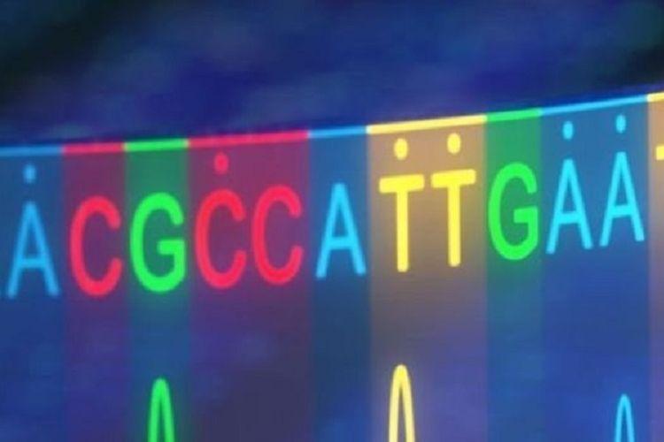 Beta-thalassemia, yang berpotensi mematikan, disebabkan oleh satu perubahan dasar tunggal dalam kode genetika