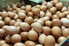 Harga Telur Merangkak Naik, Pemerintah Diminta Jaga Pasokan