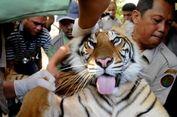 Panen Akasia, Warga Sambas Tewas Diterkam Harimau