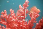 'Living Coral', Tren Warna 2019