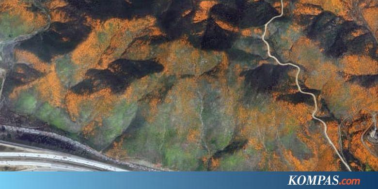 Bunga Liar Bermekaran di California, Terlihat Indah dari Foto Satelit