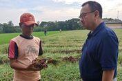 Curhat Petani Bawang di Brebes kepada Sudirman Said