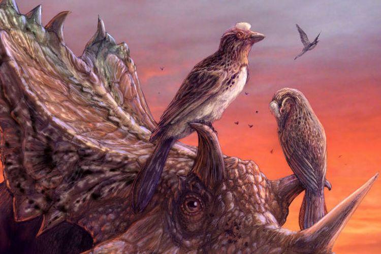Ilustrasi yang menggambarkan Mirace eatoni bertengger di Utahceratops gettyi