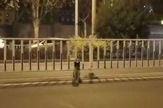 Selama 80 Hari, Anjing Ini Berada di Jalan Menunggu Pemiliknya yang Telah Tiada