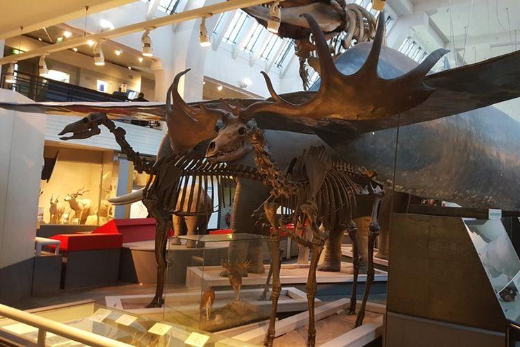 Koleksi Natural History Museum London di Mammals Hall, Senin (6/11/2017).