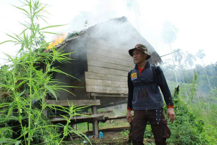 Polisi melintas di gubuk petani ganja yang dibakar di Desa Lancok, Kecamatan Sawang, Kabupaten Aceh Utara, Kamis (12/10/2017). Kali ini polisi menangkap seorang petani ganja dan membakar enam hektare kebun ganja di kawasan itu.