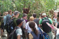 Kunjungan Wisatawan ke Tanjung Puting Pecahkan Rekor, PNBP Rp 6 Miliar