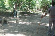 Dampak Pernyataan Gubernur NTT Naikan Tarif Masuk ke Pulau Komodo