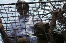 Ditolak Ragunan, Jokowi Ingin Lepas Liarkan Monyet ke Hutan