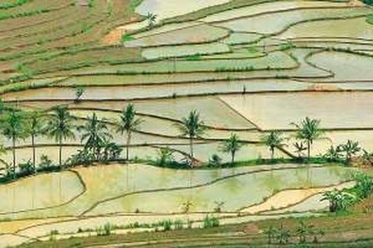 Pemandangan sawah berundak-undak di Gunung Kidul yang melampaui batas imajinasi tentang Yogyakarta.