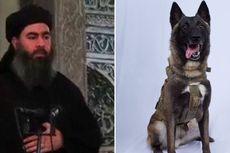 AS Rilis Foto Anjing Militer yang Kejar Pemimpin ISIS Abu Bakar al-Baghdadi