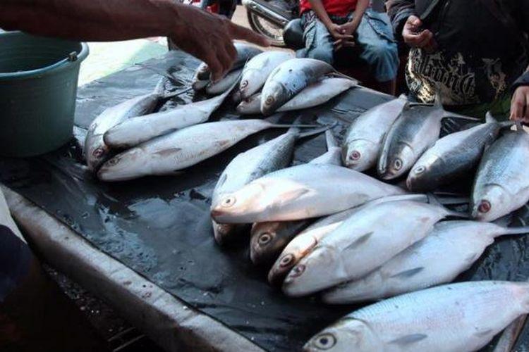 Warga memilih ikan bandeng yang dijual pedagang  di Kawasan Rawa Belong, Jakarta Barat, Jumat (8/2/2013). Bandeng-bandeng yang banyak dibeli warga untuk menyambut Tahun Baru Imlek itu dijual Rp 50.000 per kilogram.