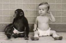 Kisah Misteri Eksperimen Kejam Donald dan Gua, yang Buat Bayi Manusia Seperti Simpanse